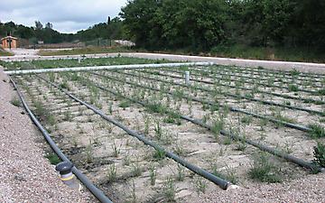 2010-06-01-Lalbenque-08